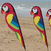 Banner Parrot